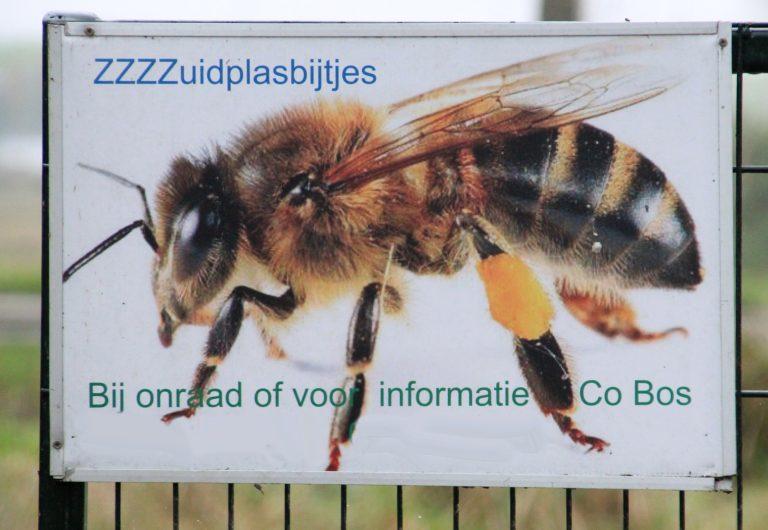 Bijen keren in voorjaar terug naar Hoofdweg