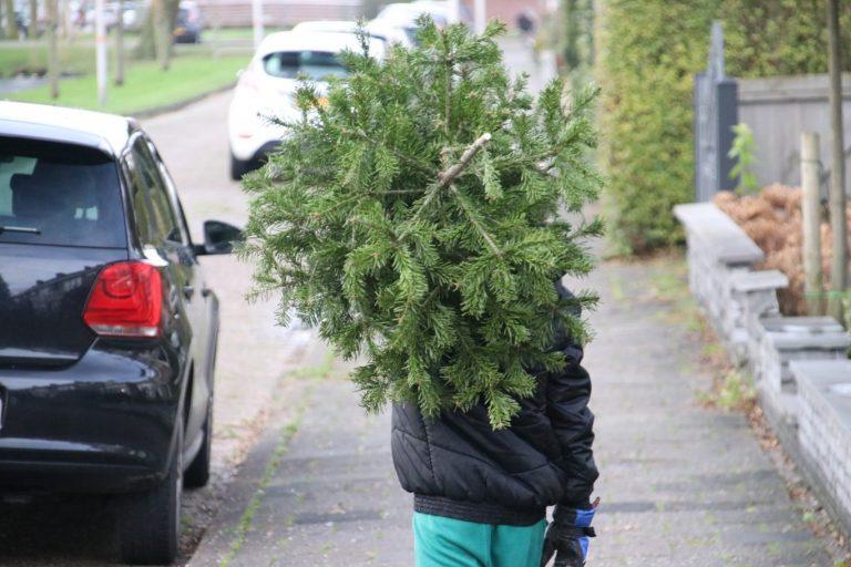 Geen geld maar een lot voor een kerstboom in Zuidplas