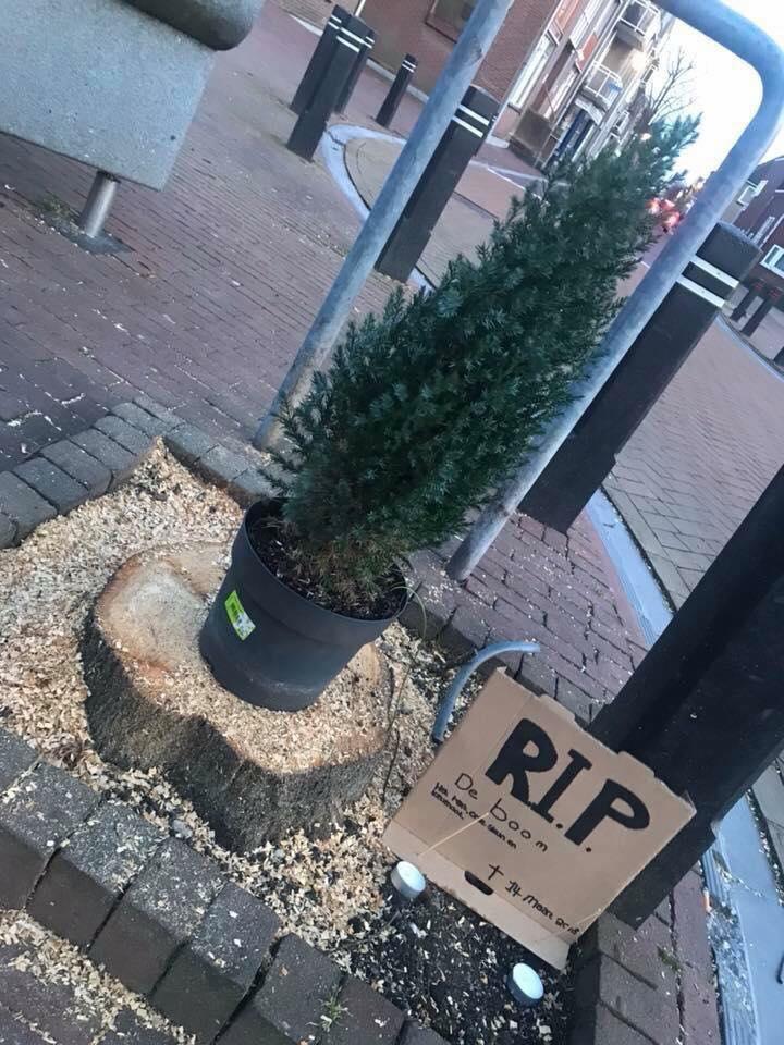 Herdenkingsplaats Boom van Zevenhuizen Fred Boevé