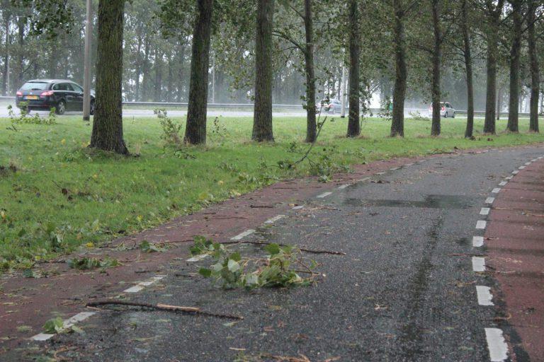 VVD maakt zich zorgen om bomen en geluid A20