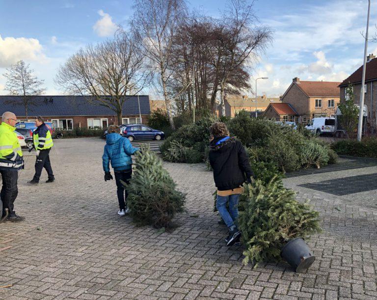 Record aantal kerstbomen ingeleverd in Zuidplas