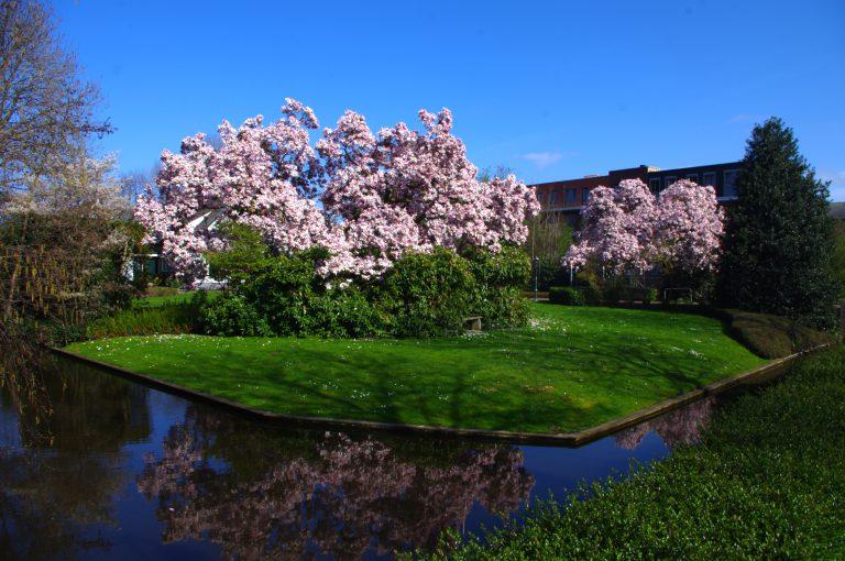 Voorjaar aan de Middelweg Moordrecht