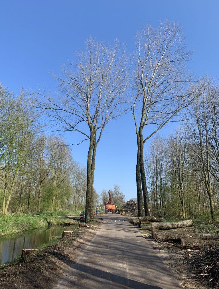Kap bomen Hitlandselaan