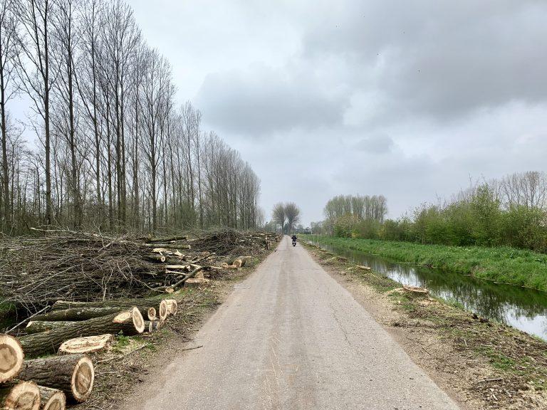 Bomenrij omgezet naar stapels boomstammen en -takken