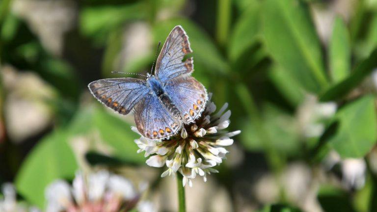 Stichting Natuurpolders ziet Hennipgaarde opbloeien