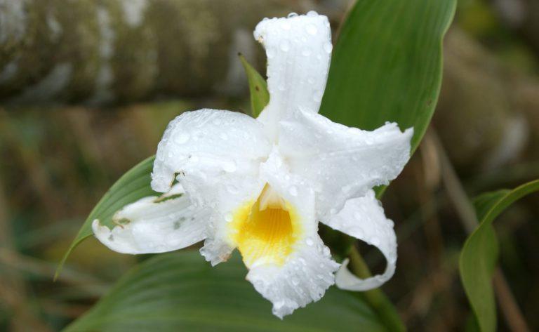 Met de Zonnebloem naar orchideeën