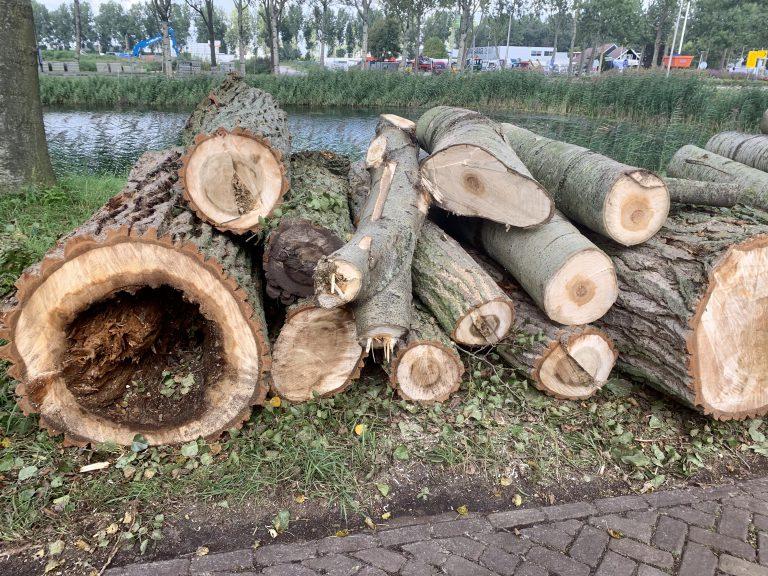 Bomen worden niet zo maar gekapt