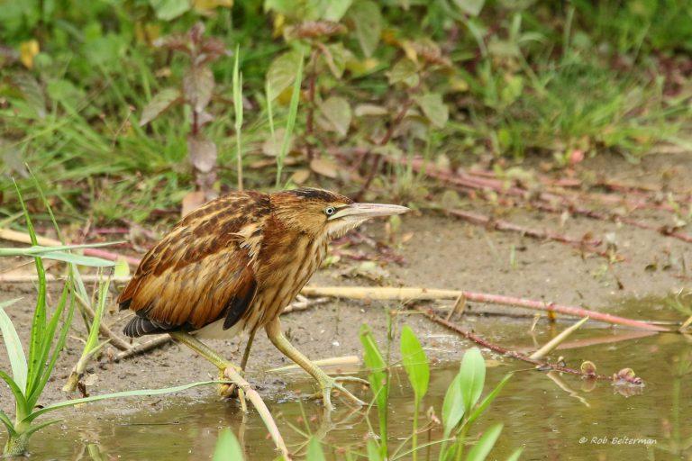 Woudaap maakt Rottemeren en Zevenhuizerplas tot belangrijk vogelgebied