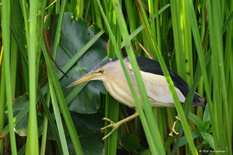 Natuur- en Vogelwacht ROTTA start cursus 'Vogelherkenning voor beginners'