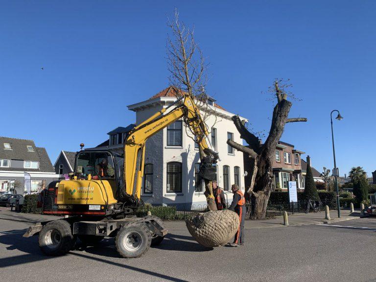 Wethouder Schuurman : Kap kastanje niet te vermijden,daarom nieuwe boom 's-Gravenweg (+video)
