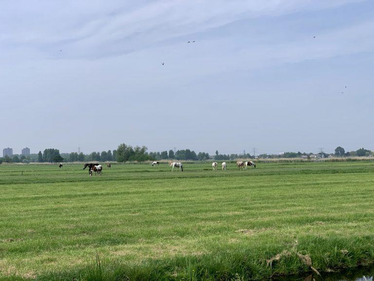 Paarden op Hitland