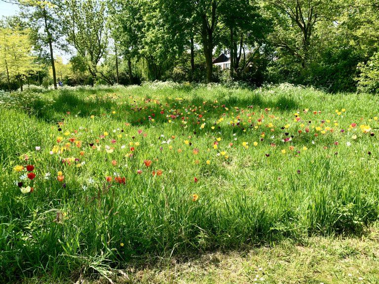 Kleurig Groene Hartpark
