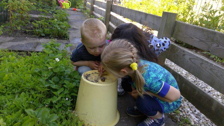 Natuurlijke verdelgers en kikkersprongen op de Groene Kinderopvang