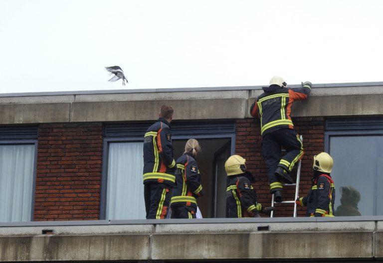 Brandweer rukt uit voor slechtlopende vogel in Nesselande