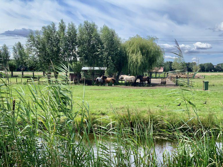 Paarden in Groene Zoom
