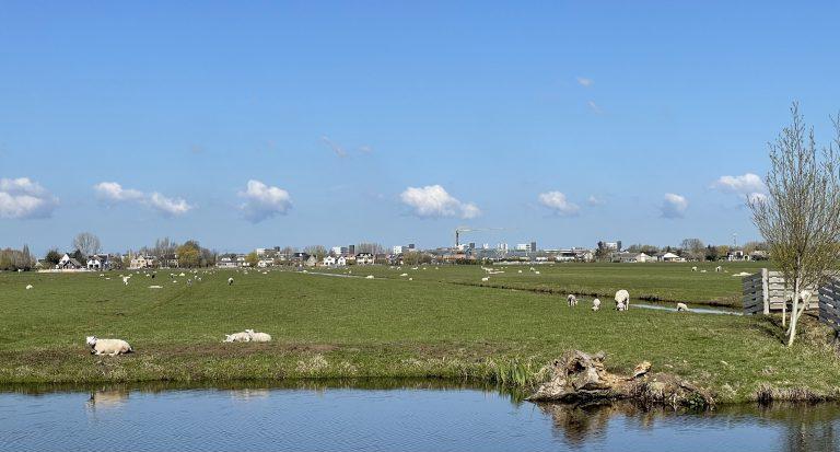 Lammetjes in Hitland