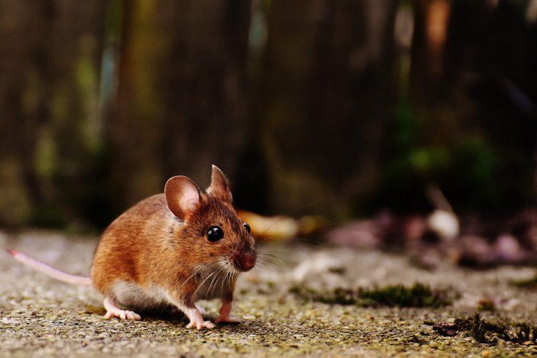 Webinar : Plaagdieren in de tuin; van vertrappen naar vertroetelen