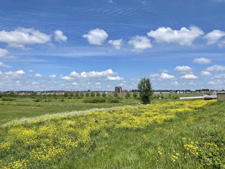 BlauwGroene zone met Westergouwe op achtergrond