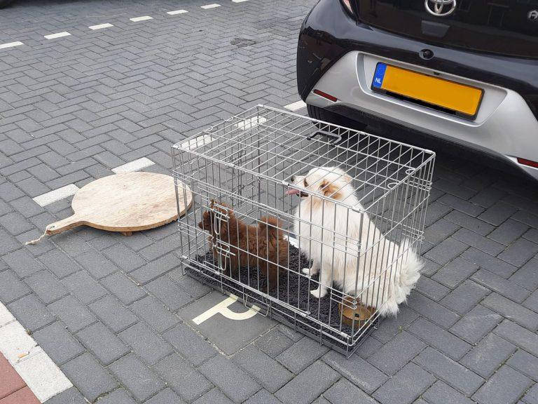 Heldhaftige buurtbewoners redden honden uit woning bij felle brand in Nieuwerkerk aan den IJssel
