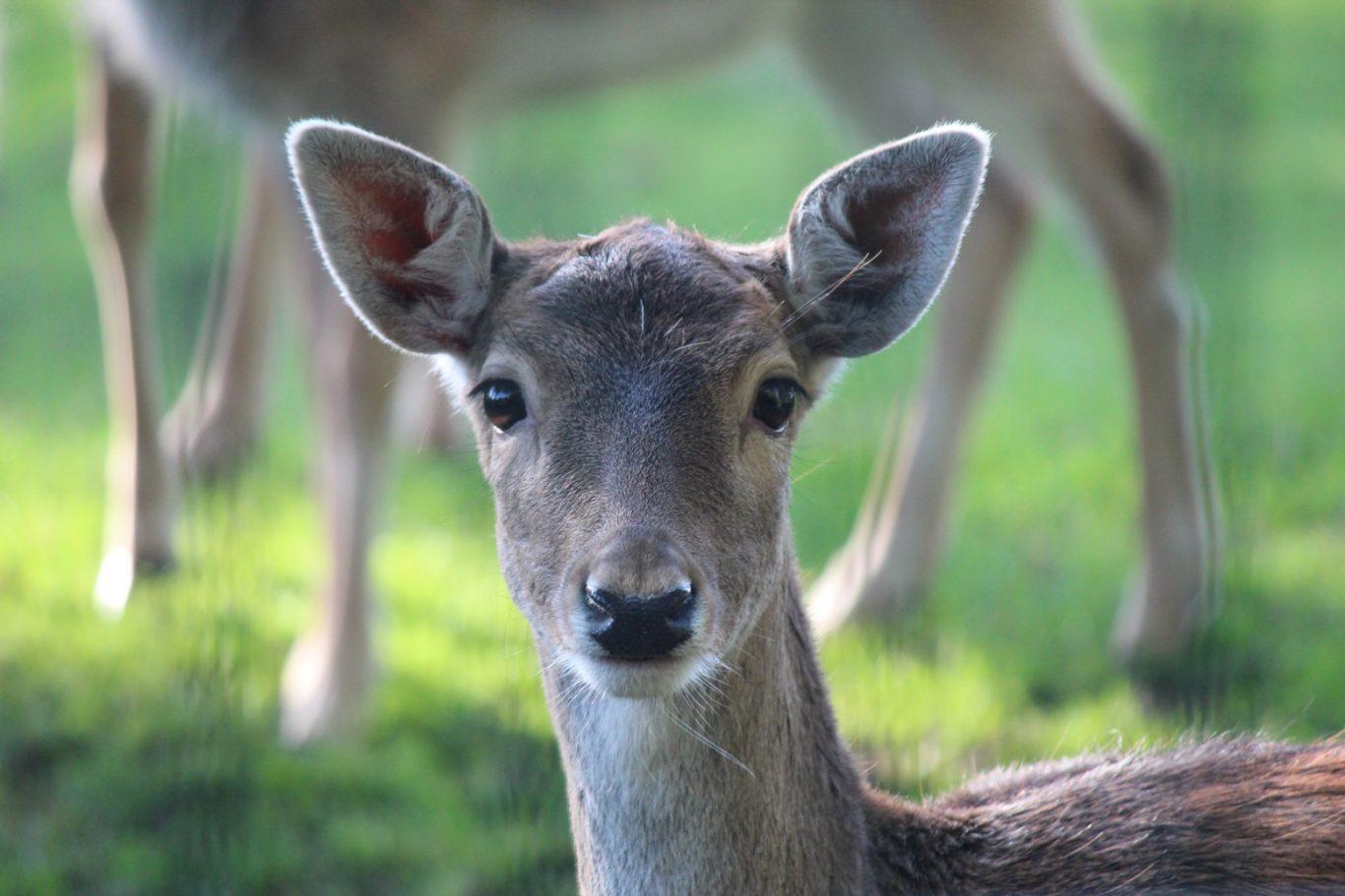Bambi Hertenkamp Nieuwerkerk