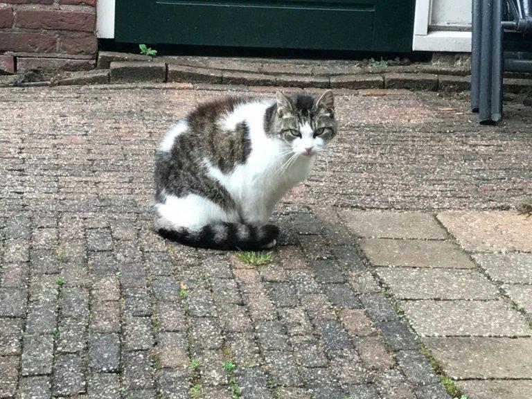 Antwoorden raadselachtige kattensterfte in Moordrecht liggen half jaar op de plank